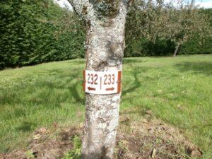 Plaque à arbre